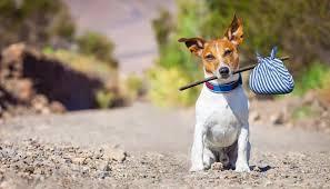 Guarda de um cachorro: Como funciona?